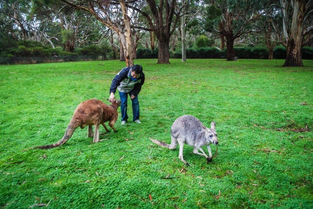 "alt=""Kangoroo Island_Australie_Adelaide_Photographe Oise Beauvais"""