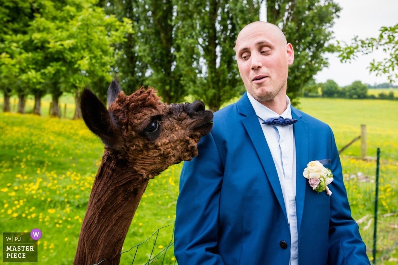 recompense award wpja - photographe mariage bretagne-saint-brieuc-rennes-vannes